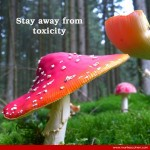#9 – Stay Away from Toxicity
